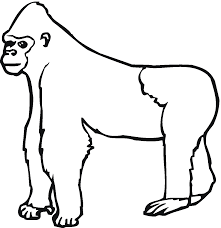 free animals gorilla printable colouring pages for preschool