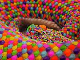 Color Blind Design Photoshop Submission For U0027color Blind U0027 Contest Design 8808353