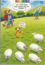 dog worrying sheep funny humorous birthday card the funny side of