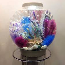 a must for my tank and the white rocks home