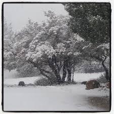 whitetrees hashtag on