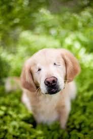 Comfort Pet Certification 139 Best Dog Stories We Love Images On Pinterest Dog Stories