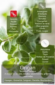 origan en cuisine comment utiliser l origan en cuisine en cuisine le mieux et provence