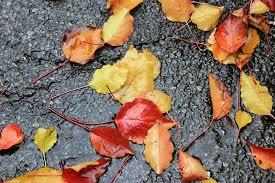 foto bagnate foglie di autunno bagnate sul marciapiede immagine stock