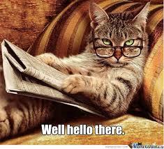 Hi Memes - hi cat by theez35 meme center
