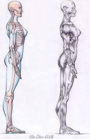 Female Body Anatomy Drawing 60 Best Bocetos De Anatomia Images On Pinterest Sketches