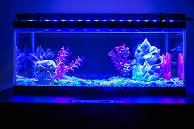 Led Aquarium Light Fixtures 36 High Power Led Aquarium Light Fixture Led Aquarium Lighting