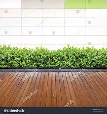 green creeper plant on white painted stock photo 205069114
