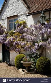 english tudor style house with wisteria stock photo royalty free