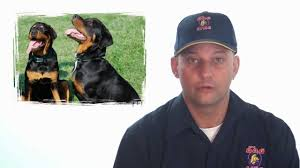 dog fence reviews and video how to select the best dog