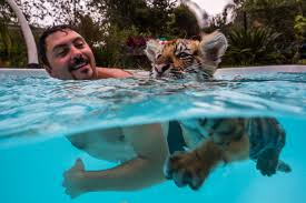 Florida wild swimming images Zoos in tampa dade city 39 s wild things jpg