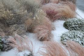 stop don t prune your ornamental grasses of the land