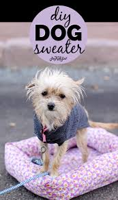 sweater sewing pattern and puppy pictures see kate sew