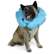Buster Comfort Collar Air Tight Collar Inflatable E Collar By Vetone Affordablevet Net