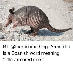 Armadillo Meme - funny armadillo memes armadillo best of the funny meme