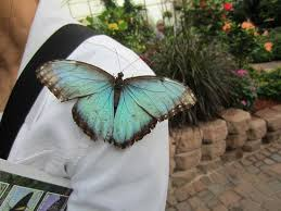 butterfly on my s shoulder picture of the original mackinac