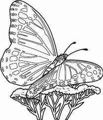 free printable butterfly coloring pages for kids for of