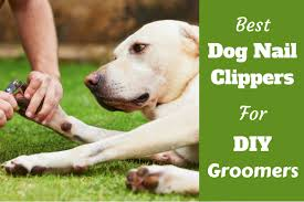 best dog nail clippers for diy groomers top 4 in 2017