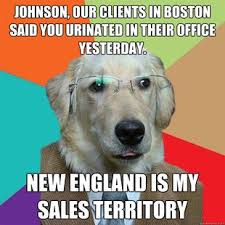 Business Cat Memes - 26 business dog meme pictures that will brighten up your office time