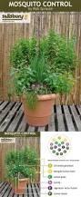 uprooting garden pests plants gardens and backyard