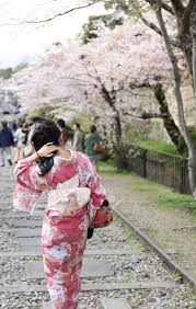 japanese in traditional dress called kimono with sakura