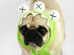 easy monster halloween costume for a dog how tos diy