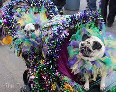mardi gras dog collars from how to make a tulle mardi gras dog collar for harvest themed