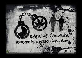 Legalize Weed Meme - marijuana arrests stats legalize a plant weed memes