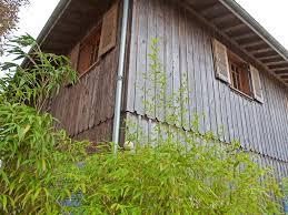 Maison En Bois Cap Ferret Vente Maison Villa Lege Cap Ferret Petit Piquey Coldwell Banker