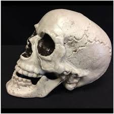 life size halloween skull mad about horror