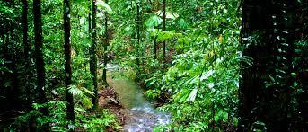 expanding daintree national park rainforest trust