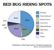 natural bed bug remedies bed bug remedies bed bug hidden spots