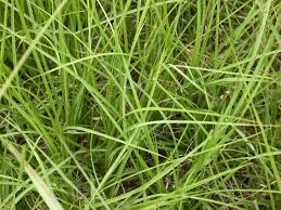 how to plant native grasses pastures u0026 forages