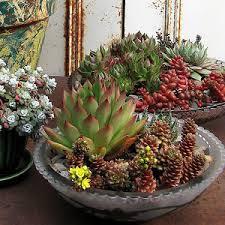 make a succulent dish garden garden club