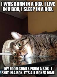 Funny Cheer Up Meme - new funny cat friday meme daily funny memes