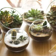 baby sputnik diy succulent terrarium kit juicykits com