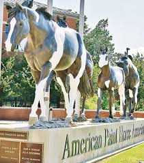rearing up paint horse relocation sets stage for growth news