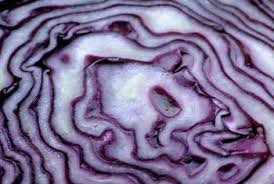 nutrients in purple cabbage healthy eating sf gate
