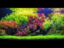 Aquascape Malaysia Step By Step Aquascape Dutchstyle Youtube