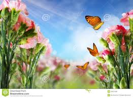 butterfly flowers butterfly on flowers royalty free stock images image 26523739