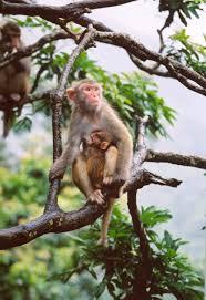 afcd wild monkeys of hong kong