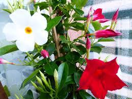 topfpflanzen balkon meine kleine balkon oase der wohnsinn