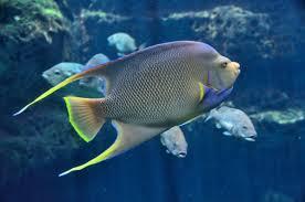 free images water nature ocean animal wildlife underwater