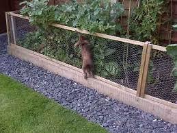 rabbit proof garden fence fasci garden