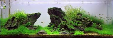 Aquascape Layout Help With Hardscape Layout Uk Aquatic Plant Society