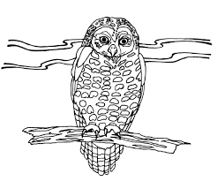 desert owl coloring page empty bird nest coloring page more information kopihijau