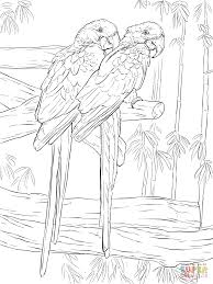 pair hyacinth macaws coloring free printable coloring pages