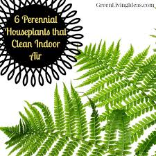 best plants for air quality which houseplants improve indoor air quality the best vibrant