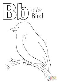 kiwi coloring bird coloring creativemove