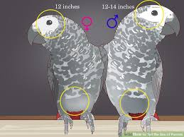 how to tell the of parrots 12 steps with pictures wikihow